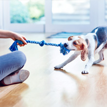 Dog playing with rope